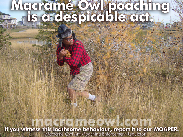 Macrame Owl Poaching is a Despicable Act